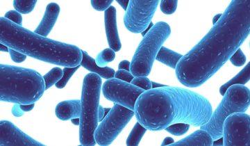 ¿Qué hacen los probióticos en mi piel?
